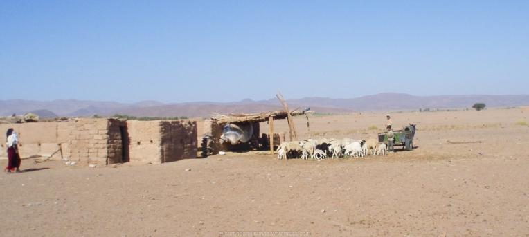 Pastores del Sáhara (Marruecos)