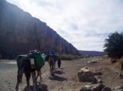 La caravana por el Sáhara