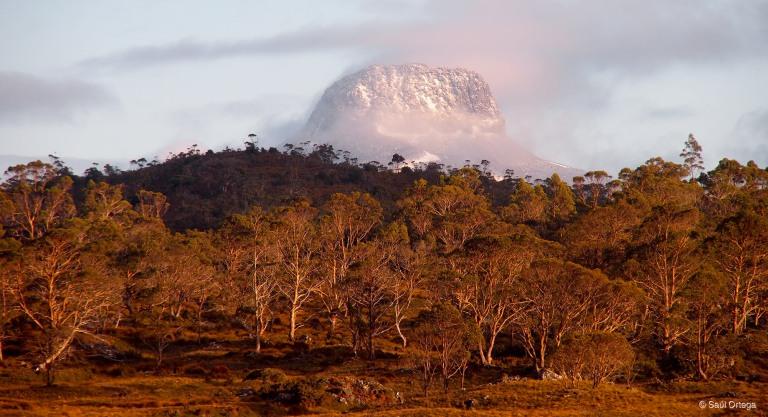 Monte Barn Buff - Overland Track (Tasmania)