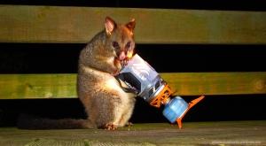 Possum con Jetboil - Overland Track (Tasmania)