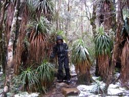 Saúl - Overland Track (Tasmania)