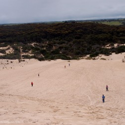 Little Sahara - Kangaroo Island (Australia)