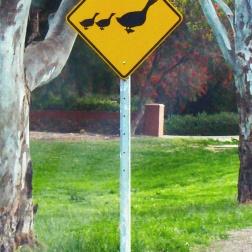 Señal de Gansos sueltos - Adelaida (Australia)