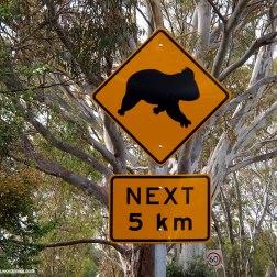 Señal Peligro Koalas - Kangaroo Island (Australia)
