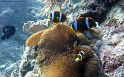 Anémona y Payasos - Great Barrier Reef (Australia)