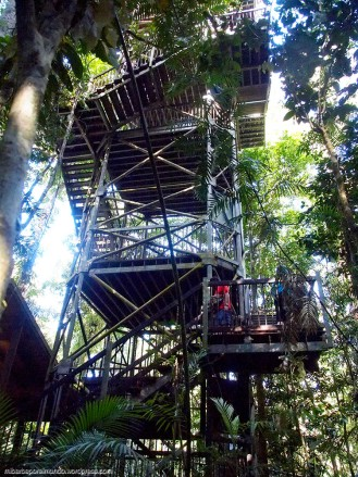 Canopy Tower - Daintree National Park (Australia)