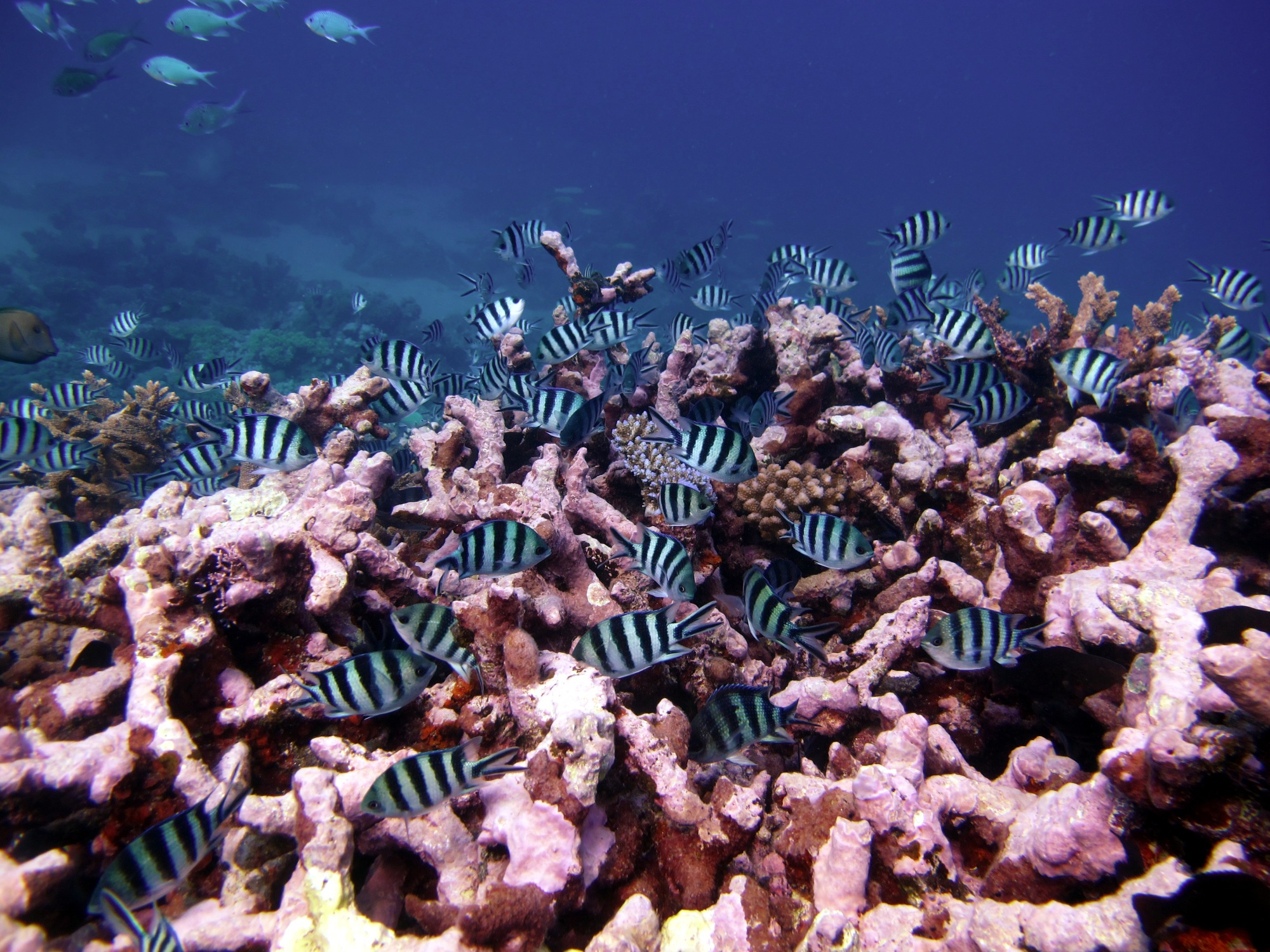 Great Barrier Reef (Australia)