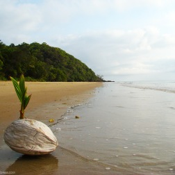 Playa - Daintree (Australia)