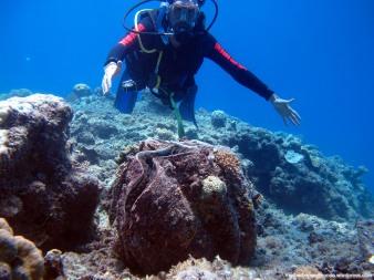 Saúl buceando - Great Barrier Reef (Australia)