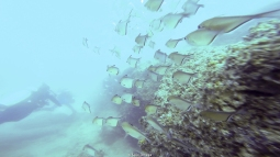 Cardúmen de peces - Tofo (Mozambique)