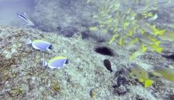Fauna marina en Tofo (Mozambique)