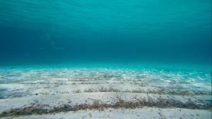 El agua es limpia y cristalina (Formentera)