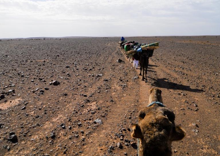 Sahara en dromedario