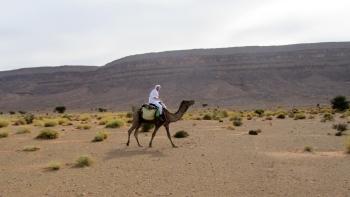 Mi barba incipiente de berebere por el desierto