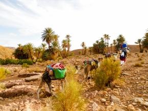 Oasis del Sáhara
