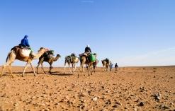 La caravana del Sáhara