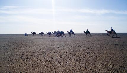La caravana por una hamada del Sáhara (Marruecos)