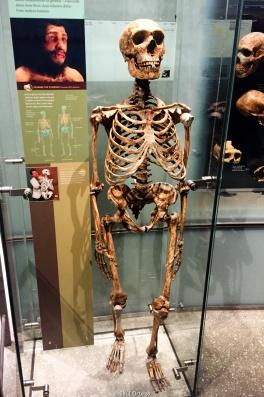 Esqueleto de Neanderthal - Museo de Historia Natural - Nueva York