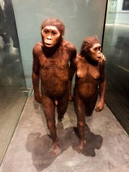 Australopitecus - Museo de Historia Natural - New York