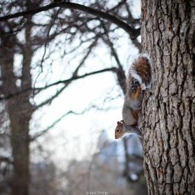 Ardilla en Central Park