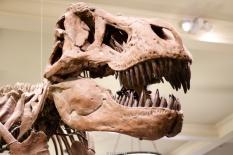 Tiranosaurus Rex - Museo de Historia Natural - Nueva York