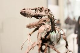Esqueleto en el Museo de Historia Natural - Nueva York
