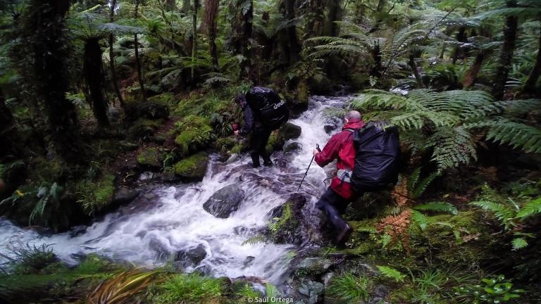 Cuando entiendes porqué esta ruta la hace poca gente - Hollyford Track - New Zealand