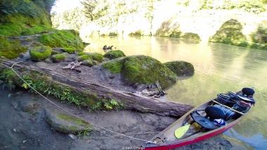 Whanganui River - New Zealand