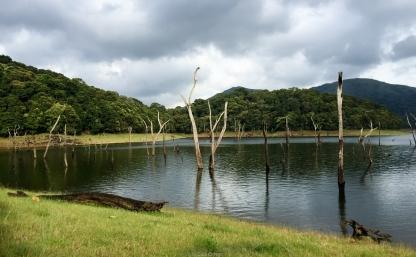 Parque Periyar - Kerala - India