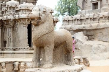 Animal Sagrado en Pancha Rathas - Mamallapuram - India