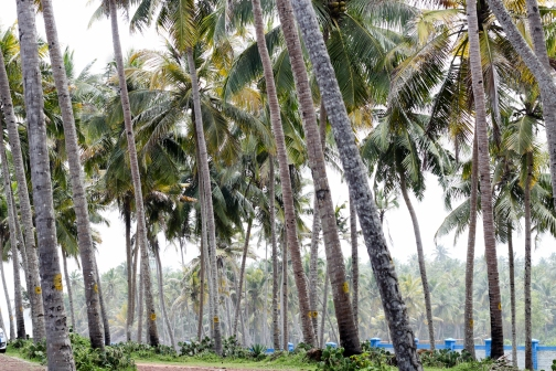 Varkala - Kerala - India