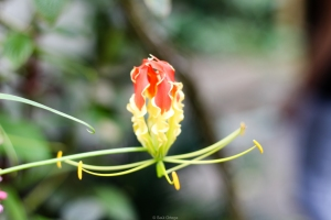 Jardín de especias - Thekkady - Kerala