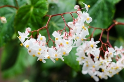 Flores en un jardín de especias - Kerala - India