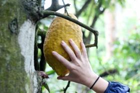 Un limón en Kerala - India