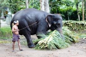 Elefante y su Mahout en Kerala - India