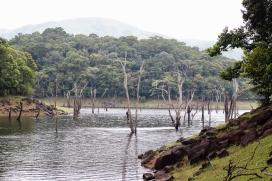 Lagos del Parque Nacional Periyar - Kerala - India