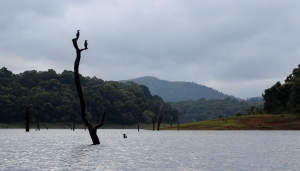 Cormoranes en el Parque Nacional Periyar - Kerala - India