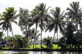 Alappuzha - Kerala - India