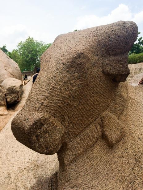 Animal sagrado Pancha Rathas - Mamallapuram - India