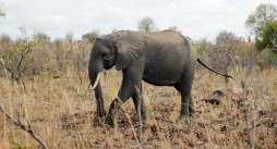 Elefante - Parque Kruger Sudáfrica