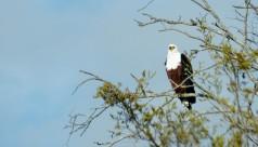 Parque Kruger Sudáfrica