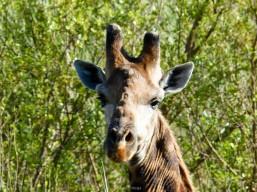 Game reserve Siduli Sudáfrica