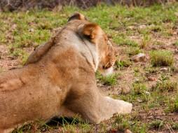 Leona - Game reserve Siduli Sudáfrica